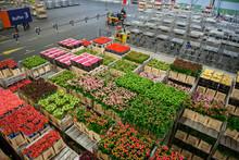 Big Flower Market In Netherland