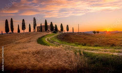 Poster Toscane Tuscan cypress
