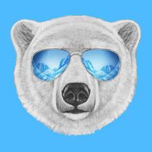 Portrait Of Polar Bear With Mi...