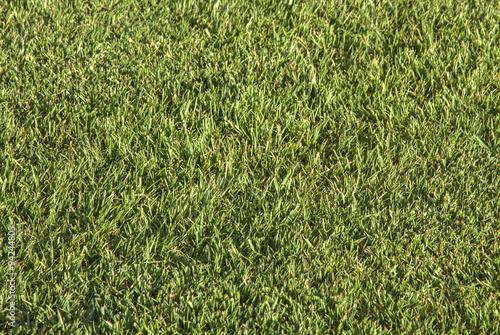 Fotografie, Obraz  textura de pradera
