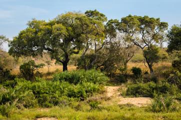 Paesaggio, savana, Kruger Park - Sudafrica