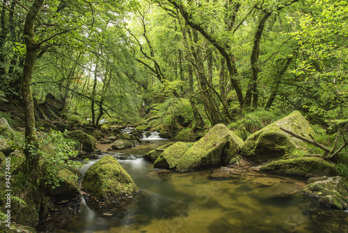 Staande foto Pistache Stunning landscape iamge of river flowing through lush green for