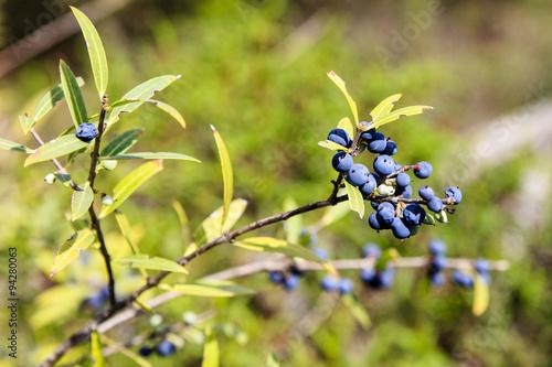 Fototapeten Natur Sardinië, planten en bomen op de hoogvlakte boven Tuili