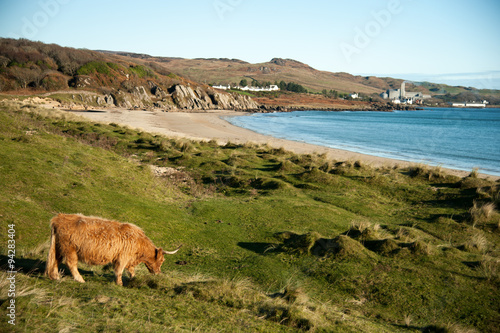 Highland cattle in front of the outskirts of Port Ellen on Islay, Scotland Fototapet