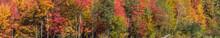 Bright Autumn Colors Of Fall Foliage Trees