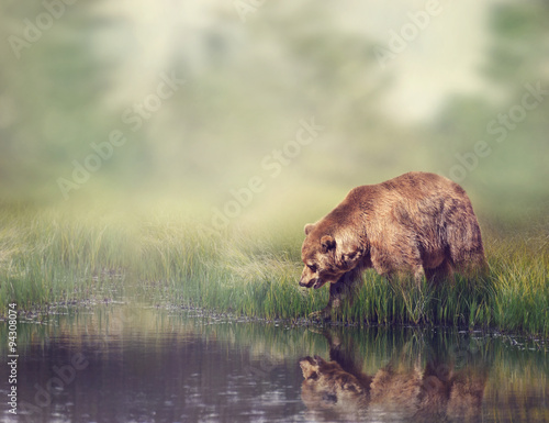 Brown Bear Near the Pond