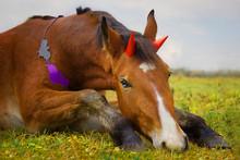 Little Sad Halloween Horse