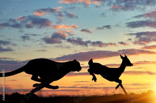 Silhouette of a cheetah running after a gazelle