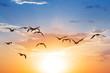 birds fly on a sunset background