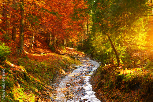Riviere River in autumn forest