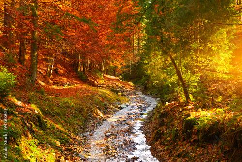 Foto auf Gartenposter Fluss River in autumn forest