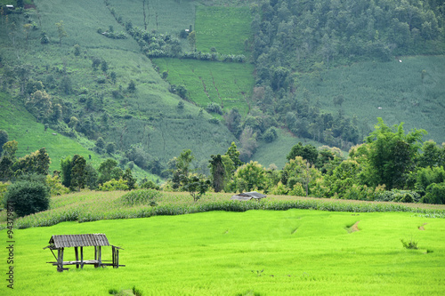 Poster Lime groen Natural landscape view of corn field and rice field over the mountain in Chiangmai, Thailand
