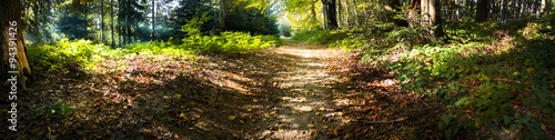 Fototapeten Wald Panoramic view of the sun rays in the forest