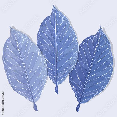 Realistic leaves vector illustration. Autumn frozen fallen leaves.
