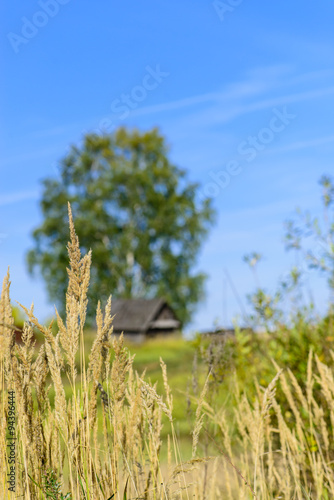 Fotografie, Obraz  dry sedge grass on a background of the autumn landscape, selecti