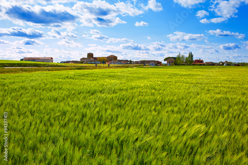 The Way of Saint James in Palencia cereal fields