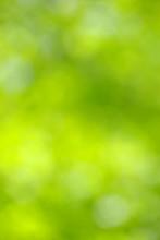 Green Blurred Background.