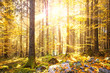 Magical shiny golden autumn sunlight with beams in morning forest. Lovley autumn season golden shiny light in forest landscape.