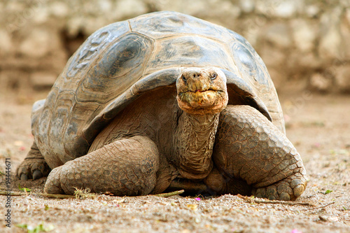 Tortue Famous Galapagos Turtle George