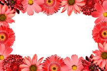 Sweet Color Petal Exotic Rose ...