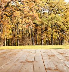 FototapetaBeautiful autumn forest. Nature background