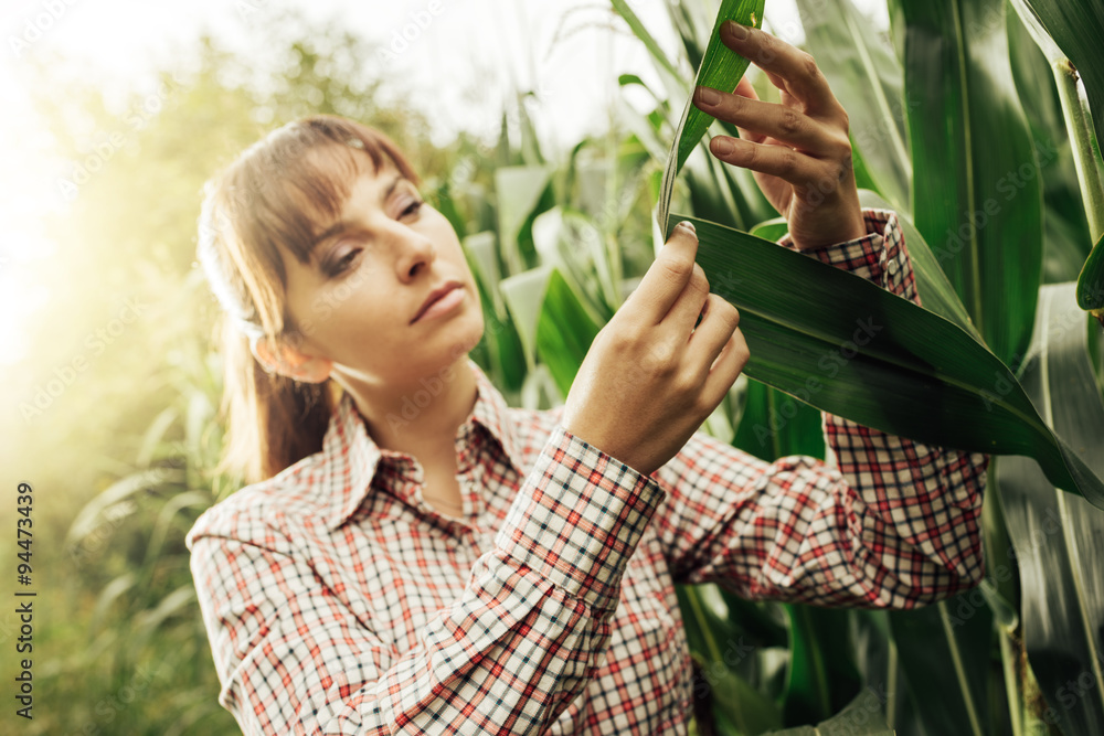 Fototapety, obrazy: Young farmer checking plants in the field
