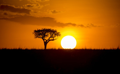 African Sunset with a tree