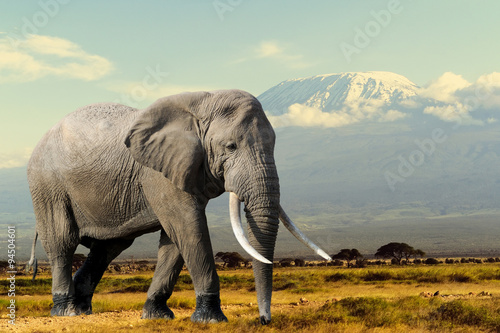 Tuinposter Olifant Elephant