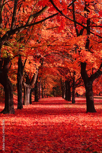 Acrylic Prints Cuban Red autumn park