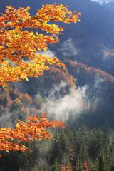 Fototapeta Drzewa Tree branch with autumn colored leafs