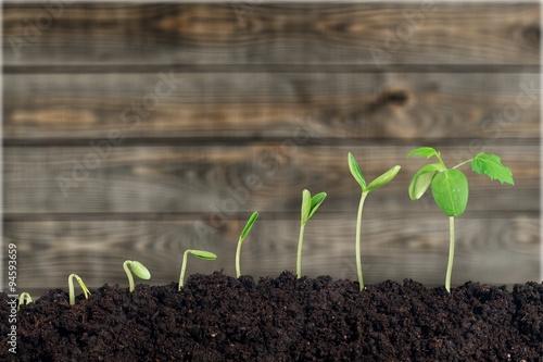 Deurstickers Planten Plant.