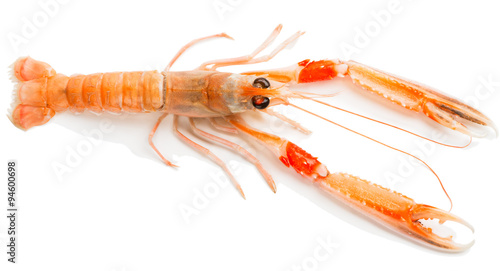 Nephrops norvegicus, view from above Canvas Print