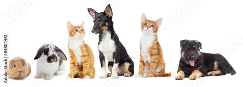 Staande foto Kip kitten and puppy