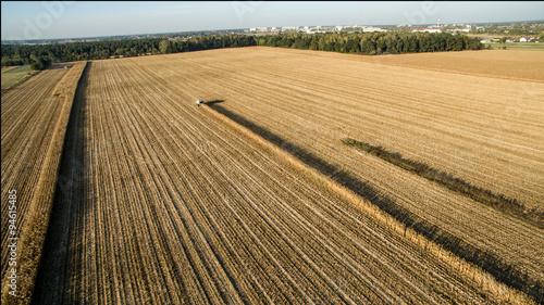 Fototapeta Koszenie kukurydzy zdjecie obraz