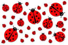 Many Ladybugs Shadows
