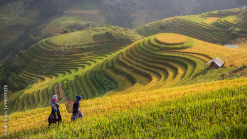 Fotobehang Rijstvelden Terraced rice field inside fog and morning ray in Mu Cang Chai,