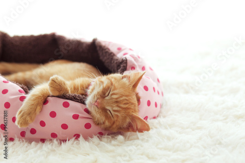 obraz lub plakat Kitten sleeping in the bed