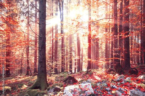 piekny-blyszczacy-czerwony-kolor-jesienne-swiatlo-sloneczne-z-belkami-w-lesie-lovley-jesien-sezonu-czerwony-kolor-opuszcza-w-lasu-krajobrazie