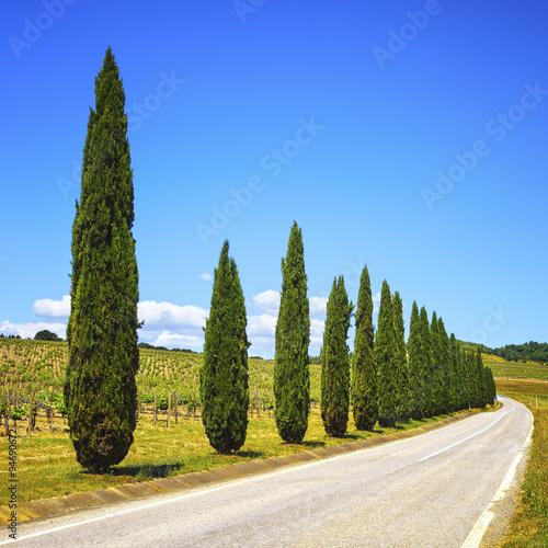Foto  Tuscany, cypress trees, vineyard and road, rural landscape, Ital