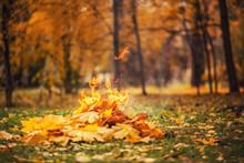 Leaves Burning
