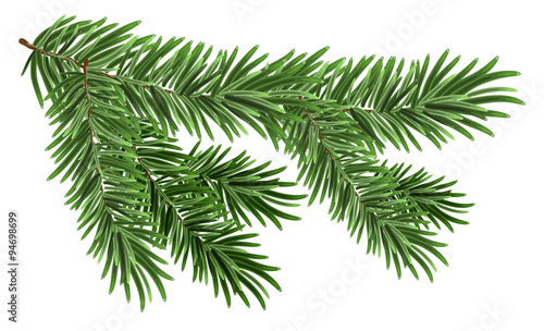 Obraz Green lush spruce branch. Fir branches - fototapety do salonu