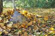râteau sur un tas de feuilles dans jardin