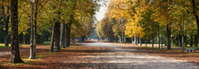 Ducale Park - Autumn View With Chestnut Trees. Parma, Italy