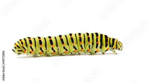 Fotografía  Caterpillar