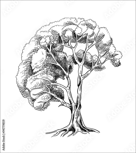 Fototapeta vector tree sketch engraving, silhouette of a tree hand drawn, black and white illustration, vintage treee drawing, tree in engraving style obraz na płótnie