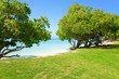 Ocean coastline with trees