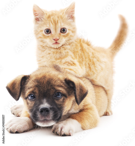 Photo Rred kitten in puppy.