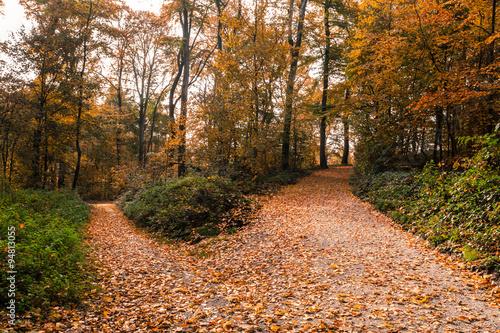 Fotografie, Obraz  Herbst Park Weg Gabelung
