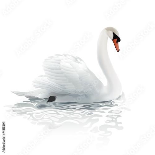 Swan Fototapeta