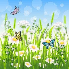 NaklejkaFlower meadow in summer with butterfly